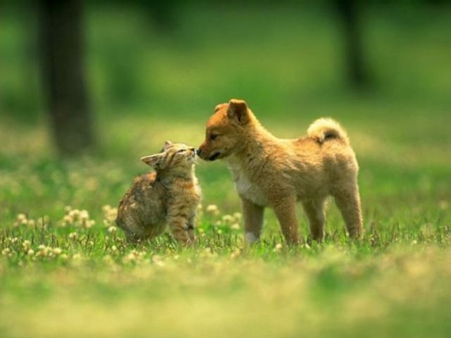 cats and dogs_1
